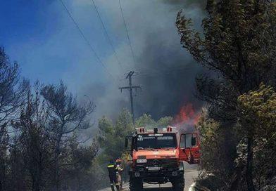 11 Δασικές πυρκαγιές μέσα σε δύο 24ώρα στην Ζάκυνθο.