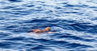 Ο Σταύρος Αραχωβίτης μιλάει για την προστασία της χελώνας Caretta Caretta