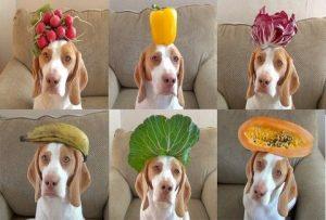 Φρούτα και Λαχανικά για τον σκύλο σας.