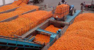 Ενημέρωση από την Διεύθυνση Γεωργίας Π.Ε. Λακωνίας για τους παραγωγούς πορτοκαλιών για το που πρέπει να δίνουν την παραγωγή τους.