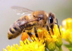 Προστασία των μελισσών από την κακή χρήση γεωργικών φαρμάκων.