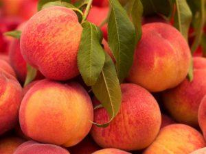 Διανομή φρούτων από την Π.Ε. Λακωνίας.
