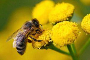 Προσοχή στους ψεκασμούς από τους καλλιεγητές λόγω μελισσών.