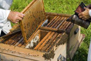 Δηλώσεις για Μελισσοκόμους (δήλωση κυψελών διαχείμασης έτους 2017).