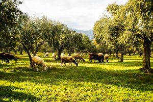 Καταβολή οφειλών σε βοσκοτόπους από την Διεύθυνση Αγροτικής Οικονομίας και Κτηνιατρικής.