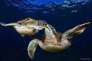 Ενημερωτική ημερίδα για την προστασία της χελώνας CARETTA CARETTA!