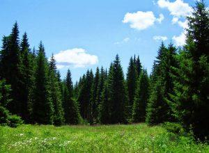 Απαγόρευση κυκλοφορίας οχημάτων και Παραμονή Εκδρομέων σε  Εθνικούς Δρυμούς, Δάση και Ευπαθείς Περιοχές στην Λακωνία.