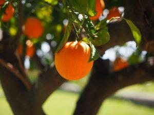 27η Γιορτή Πορτοκαλιού στη Στεφανιά