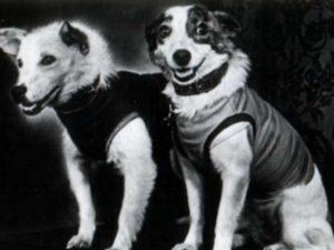 Σαν σήμερα 19 Αυγούστου – η Σοβιετική Ένωση στέλνει στο διάστημα το «Σπούτνικ 5» με επιβάτες τους σκύλους Μπέλκα και Στρέλκα