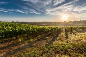 Άμεση ανταπόκριση του Υπουργού Αγροτικής Ανάπτυξης και Τροφίμων στην παρέμβαση του Περιφερειάρχη Πελοποννήσου για την εξισωτική αποζημίωση