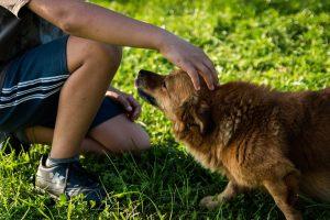 Κτηνίατροι έκαναν έλεγχο στον χώρο φύλαξης σκύλων στο Ξηροκάμπι