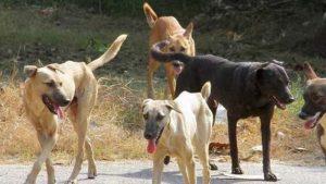 Επίθεση σκύλων στον υπασπιστή του Ταξίαρχου ΚΕΕΜ Σπάρτης