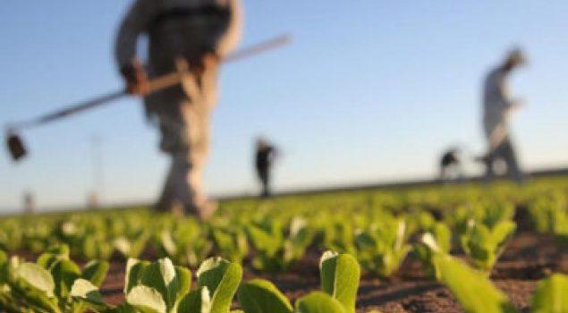 Ερώτηση Σ. Αραχωβίτη συν 55 βουλευτών ΣΥΡΙΖΑ για τις ανάγκες αγροτικών καλλιεργών