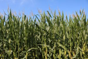 Κατάλογος δικαιούχων μεταποίησης γεωργικών προϊόντων