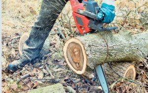 Λακωνία. Θανάσιμος τραυματισμός από κοπή δέντρων