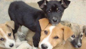 Καταγγελία για φόλες σε αδέσποτα και δεσποζόμενα ζώα στην Σπάρτη