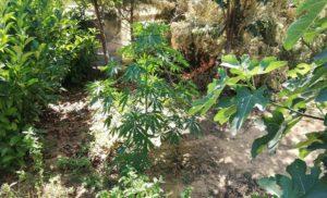 Συνελήφθησαν 7 άτομα στην Μεσσηνία – κατασχέθηκαν 100γρ. κάνναβης