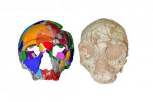 Γνωρίζατε ότι : το παλαιότερο κρανίο Homo Sapiens βρέθηκε στην Μάνη
