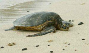 Συστάσεις για την προστασία της Θαλάσσιας Χελώνας από το Λ/Χ Γυθείου
