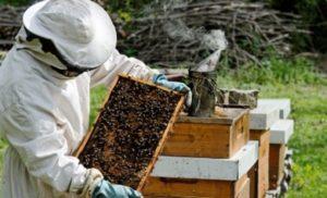 Ανακοίνωση για τους μελισσοκόμους της Π.Ε Λακωνίας