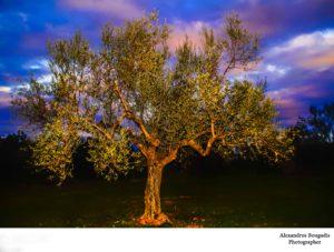 Σύσκεψη για την αναβίωση της Γιορτής Ελιάς στην Σελλασία