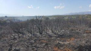 Πυρκαγιά στην Τ/Κ Γουβών Δήμου Ευρώτα