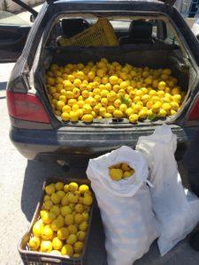 Κορινθία – Συνελήφθησαν για κλοπή τριακοσίων κιλών λεμονιών