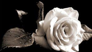 Συλλυπητήριο μήνυμα Δημάρχου Σπάρτης για την απώλεια της νεαρής Αντωνίας
