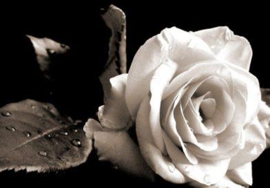 Συλληπτήριο μήνυμα (ψήφισμα) ΕΛΜΕ Λακωνίας για τον θάνατο της Τριαντάφυλλης Οικονομοπούλου -Κουμουτζή
