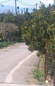 Κίνδυνος ατυχήματος από κλαδιά δέντρου στον Λεήμονα Δ. Ευρώτα