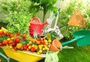 Ποια είναι τα φυτά που διώχνουν τα κουνούπια;