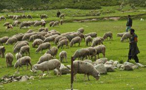 """Στ. Αραχωβίτης: «Και """"κολοβή"""" και καθυστερημένη η στήριξη για τους κτηνοτρόφους»"""