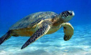 Ανακοίνωση για περιστατικά επίθεσης και προστασίας θαλάσσιας χελώνας στην Μάνη