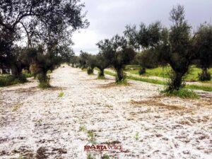 Άμεση ενίσχυση των Αγροτών  ζητά ο Δ. Σπάρτης λόγω της έντονης χαλαζόπτωσης