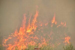 Κάλεσμα του Δ. Αν. Μάνης σε συνάντηση εργασίας για την καταστροφική πυρκαγιά