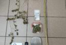 Λακωνία : Συνελήφθη 54χρονος για ποσότητα κάνναβης και αρχαιολογικό αντικείμενο