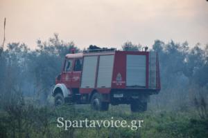 Ριζά Σπάρτης Πυρκαγιά (10)