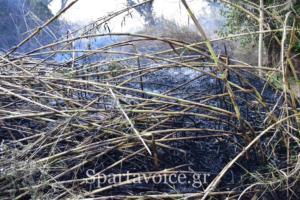 Ριζά Σπάρτης Πυρκαγιά (3)