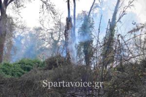 Ριζά Σπάρτης Πυρκαγιά (9)