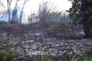 Ριζά Σπάρτης Πυρκαγιά (5)